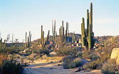 Baja California, Mexico - Area Natural Protegida Valle de los Cirios