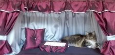 Kitten Mittens, Valance Curtains, Kitty, Cats, Home Decor, Blinds, Little Kitty, Gatos, Decoration Home