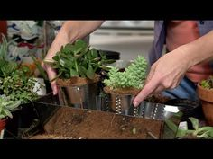 How to Plant an Indoor Succulent Garden with Gina. #succulent, #miracle-gro, #gardenieres