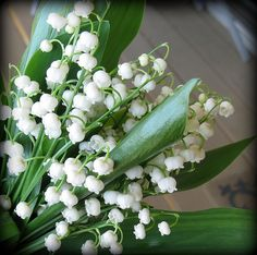 Lilly of the Valley - white  http://www.flickr.com/photos/janscamera/