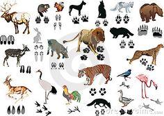 Begeleide of zelfstandige activiteit - De dieren en de sporen van de kleur