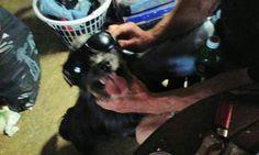 Chester in sunglasses