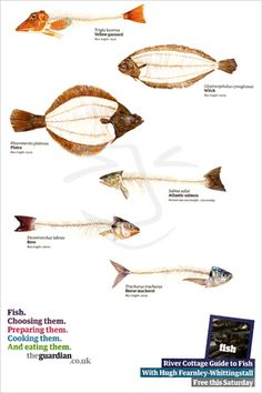 river cottage guide to fish_advert