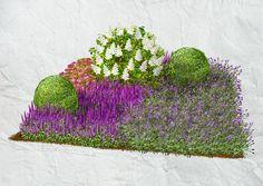 weißblühende Hortensien und rundlichen Buxuskugeln auf einem lilafarbenen Meer aus Lavendel, Spierstrauch und Salbei.