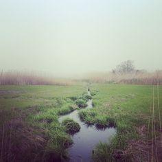 Morning Fog - The Creeks - Nantucket Island
