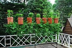 Growing upside down tomatoes with herbs. Love the way they painted them to look like terracotta pots and the black beam thing they made to hang em'.  I need to do this asap.