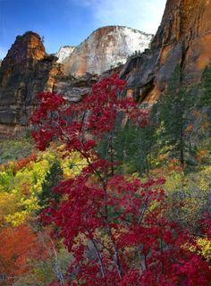 Autumn in Zion National Park, Utah