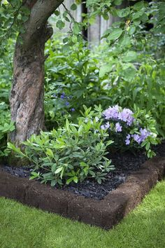 Affordable And Effective Cottage Garden Designing Methods For Your Home Your home is your world, and much like the world around us, looks are important. Diy Container Gardening, Garden, Woodland Garden, Cottage Garden, Shade Garden, Lawn And Garden, Outdoor Gardens Design, Outdoor Gardens, Cottage Garden Plants