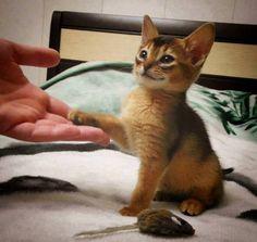 Hi, Pawleased To Meet You!