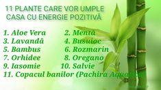 Pachira Aquatica, Salvia, Aloe Vera, Vegetables, Health, Medicine, Plant, Health Care, Sage