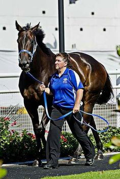 Black Caviar: Northern Dancer both top and bottom in her bloodlines Standardbred Racing, Most Beautiful Horses, Pretty Horses, Spanish Riding School, Black Dancers, Kentucky Horse Park, American Pharoah, Sport Of Kings, Thoroughbred Horse
