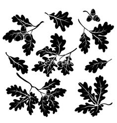 Oak branches with acorns silhouettes vector - by oksanaok on VectorStock®