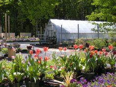 Garden Visit: Orange County Arboretum |