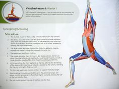 Low back pain isone of the mainbody complaints from people of all ages, occupations, and sport disciplines. An unfamiliar muscle called the Psoas (pronounced soh-as) often contributes to back pai…