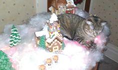 Bad Christmas kitty