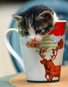Take one gloomy day.  Add a cup of Christmas kitten.  Voila!  Joy, joy, joy!