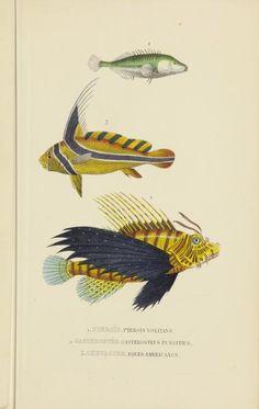 Atlas - Dictionnaire classique des sciences naturelles : - Biodiversity Heritage Library