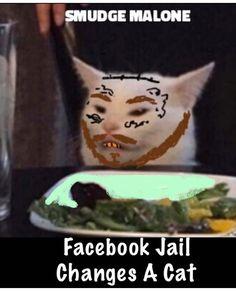 Funny Cat Memes, Funny Relatable Memes, Funny Comics, Funny Cats, Cats Humor, Hilarious, Funny Shit, Funny Stuff, Jokes Pics