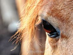equine artists | Columbia, Canada, horse paintings, horse art, horse photography, horse ...