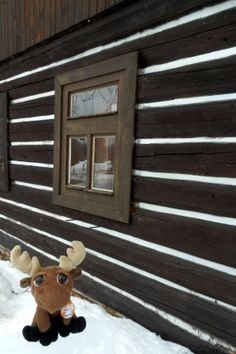 Mr. Moose in Harrachov. If you would like to visit Krkonoše, Mr. Moose recommends a private accomodation at the small family pension - Chaloupka u Zvířecích, Nový Svět 63, Harrachov.