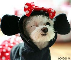 If you love your dog get him quality bed to rest. Click on image... #dog #costumes