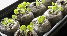 steps to starting seeds in March