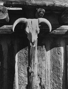 Cow Skull, Santa Fe, New Mexico  photo by Todd Webb, 1962
