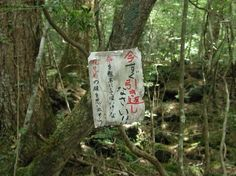 Aokigahara Woods( 2nd world famous suicide spot) , Japan