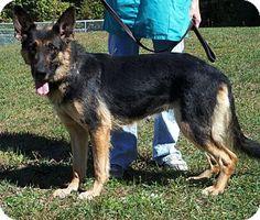 Adopt A Dog Mn St Paul