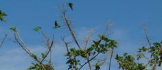 Nature Pictures, Costa, Birds, Flowers, Plants, Animals, Animales, Animaux, Bird