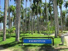 Palmentuin - Paramaribo - Reviews of Palmentuin - TripAdvisor