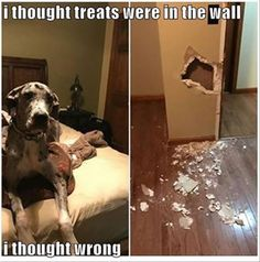 Hilarious Photos Of Pets Caught RedHanded BlazePress Dogs - 23 hilarious photos of pets caught red handed