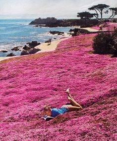 Monterey - California  Ice plant comes each spring to cover the land between the beach and the land
