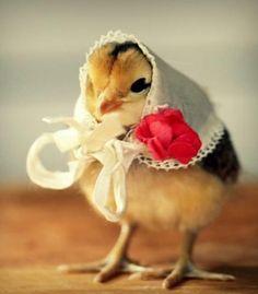 cute cute chick<3
