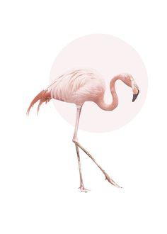 Plakat med Flamingo og rosa sirkel