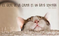 El Blog de la Loles Independiente 2: Citas sobre gatos