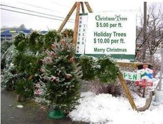 I'll take TWO Christmas trees, then.