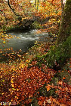River Brathay Autumn - England