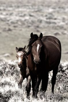 Wild Horse - Mare and her foal.                                                                                                                                                      More