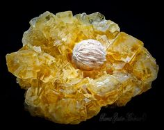 Baryte - Fluorite   Barras-Gautier-Min. Minions, Snack Recipes, Snacks, Minerals, Chips, Collections, Food, Crystals, Snack Mix Recipes
