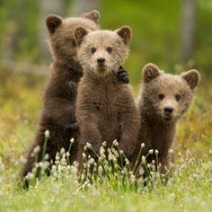 #bears #osos #cute Photo Unsure by James Wright on 500px