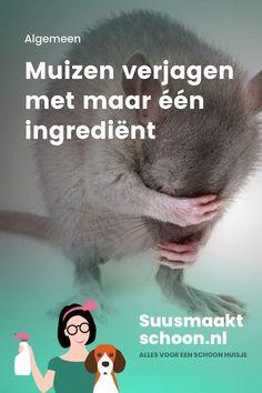 Muizen definitief verjagen met maar één ingrediënt