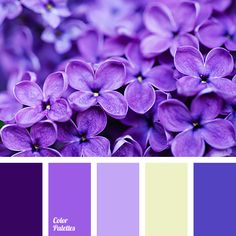 Color gamma of this palette is based on a beautiful combination of deep shades of lilac and dark blue with soft pastel tones. Lilac color evokes positive e Colour Pallette, Colour Schemes, Color Combinations, Lilac Hair, Lilac Color, Purple Colors, Periwinkle, Inspiration Design, Color Balance