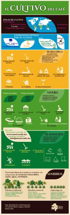 Entre otros, la altitud, el clima, la selección del terreno y la sombra son parte importante del cultivo del café mexicano.