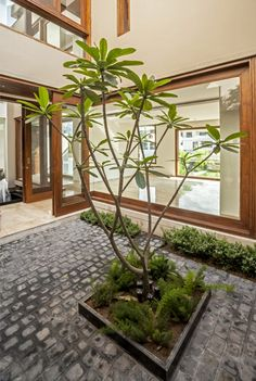 Image 1 of 23 from gallery of Twin Courtyard House / Charged Voids. Photograph by Purnesh Dev Nikhanj Indoor Courtyard, Courtyard Landscaping, Stone Landscaping, Courtyard House Plans, Internal Courtyard, Indoor Garden, Courtyard Gardens, Terrace Garden Design, Courtyard Design