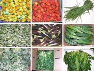 normal_groenten.jpg (188×143)