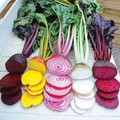 "Amazon.com : 600 Seeds 9g Beetroot ""Rainbow Blend"" (Beta vulgaris) Seeds By Seed Needs : Patio, Lawn & Garden"