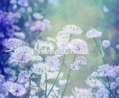Um sonho lindo fundo com Prado de flores — Imagem Stock #90725350