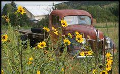 Art old pickup trucks - Bing Images rusty-trucks-cars-tractors-bikes-trains Old Pickup Trucks, Farm Trucks, Jeep Pickup, Pickup Camper, Lifted Trucks, 4x4 Trucks, Small Trucks, Diesel Trucks, Ranch