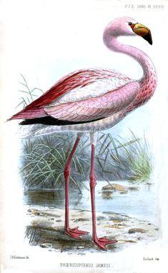 pink flamingo illustration.